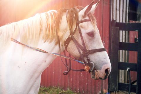 Pferd in der Sonne