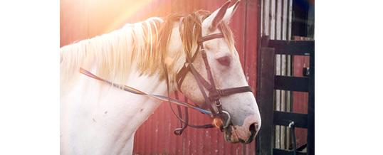 So schützen Sie Ihr Pferd vor der Sommerhitze